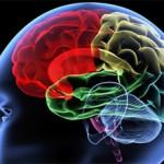 Как заставить свой мозг работать на 100 процентов